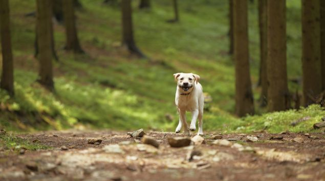 Man sieht einen Hund auf einem Waldweg.