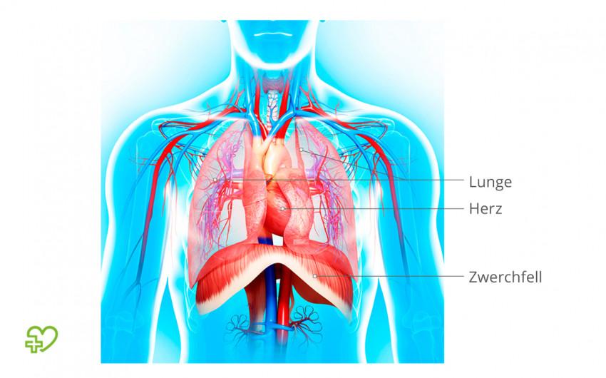 Gase im Magen-Darm-Trakt können das Zwerchfell nach oben drücken. Herz und Lunge werden eingeengt. Dadurch kann ein Roemheld-Syndrom entstehen.Roemheld-Syndrom entstehen.