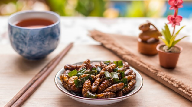 Teller mit Insekten