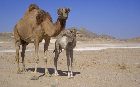 MERS (Middle East Respiratory Syndrome) Vorbeugen: Kontakt zu ...