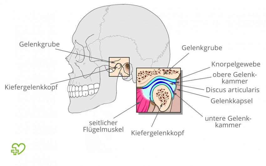 Craniomandibuläre Dysfunktion: Anatomie des Kiefergelenks
