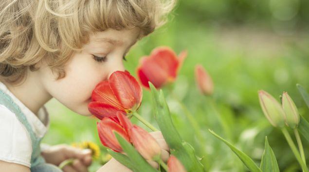 Das Bild zeigt ein Kind, das an einer Tulpe riecht.