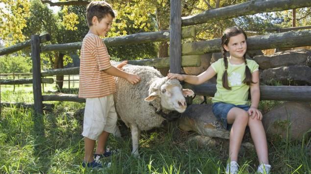 Das Bild zeigt zwei Kinder mit einem Schaf.