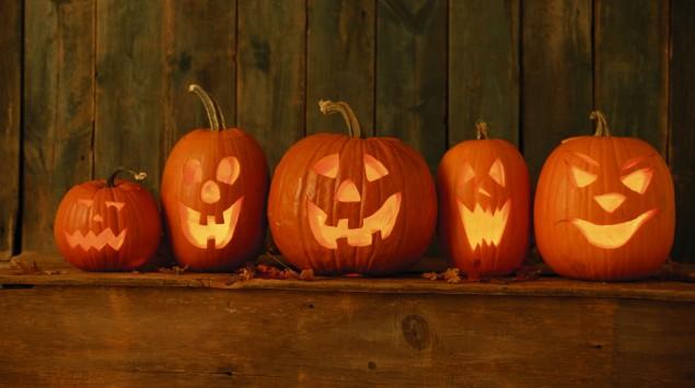 Das Bild zeigt mehrere Kürbisse zu Halloween.