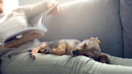 Ein Hund liegt schlafend auf den lang ausgestreckten Beinen einer Frau, die lesend auf einem Sofa sitzt.