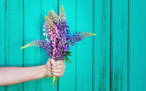 Lupinen sehen nicht nur hübsch aus, man kann ihre Samen auch verzehren.