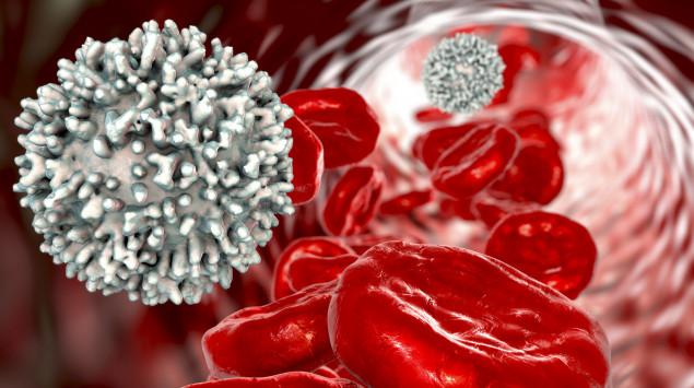 Bei einer Leukämie bidet der Körper zu viele unreife und nicht funktionsfähige weiße Blutkörperchen.