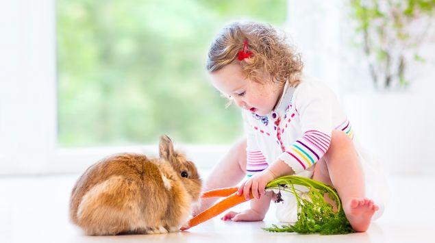 Das Bild zeigt ein kleines Mädchen, das ein Kaninchen füttert-