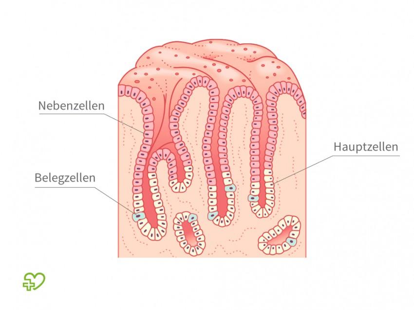 magen darmpilz symptome