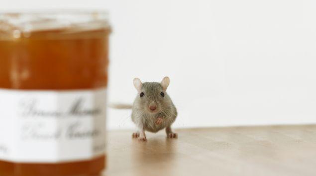 Das Bild zeigt eine Maus neben einem Marmeladenglas.