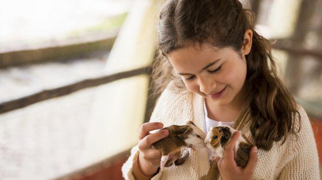 Das Bild zeigt ein kleines Mädchen mit zwei Meerschweinchen.