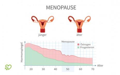 Illustration zu den hormonellen Veränderungen während des Alterungsprozesses der Frau.