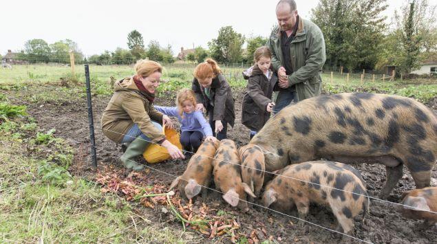 Eine Frau, ein Mann und drei Kinder füttern ein Hausschwein und dessen Ferkel in einem Außengehege.