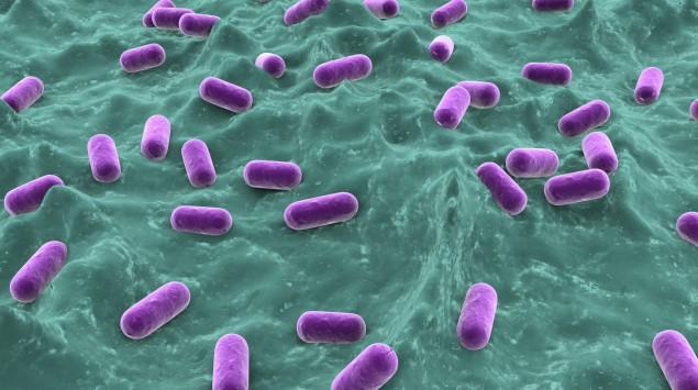 Man sieht Milchsäurebakterien auf einer Schleimhaut.