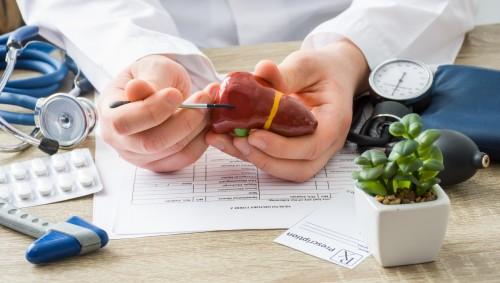 Ein Arzt zeigt auf ein Modell einer Leber mit Gallenblase.