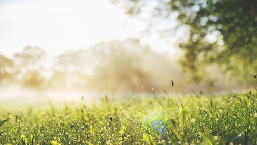 Man sieht eine sommerliche Wiese im Morgendunst.