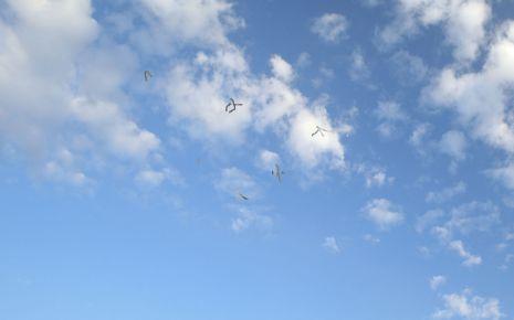 Darstellung von Mouches volantes