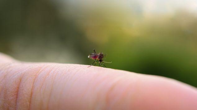 Eine Mücke sitzt auf einem Finger.