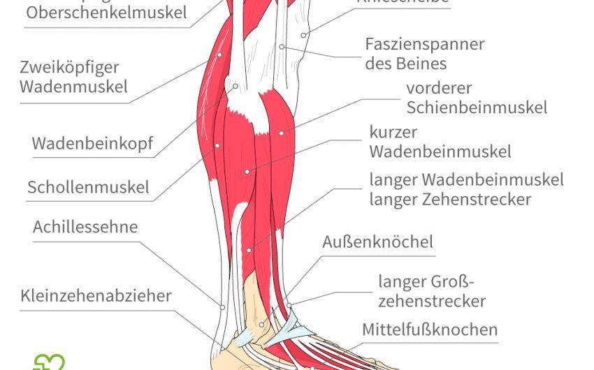 Achillessehnenriss (Achillessehnenruptur): Symptome, Ursachen ...