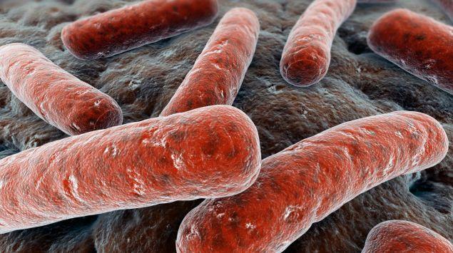 Das Bild zeigt ein Stäbchenbakterium.