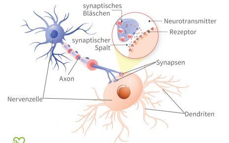 Man sieht eine grafische Darstellung zweier Nervenzellen und dem synaptischen Spalt.