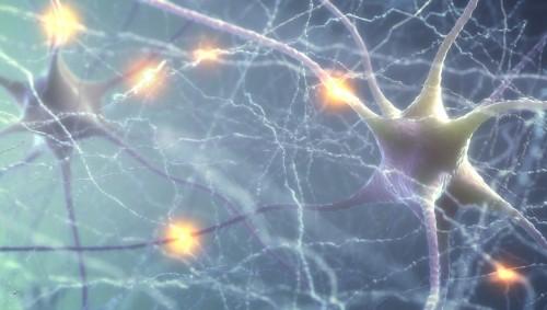 Man sieht ein darstellung von Neuronen.
