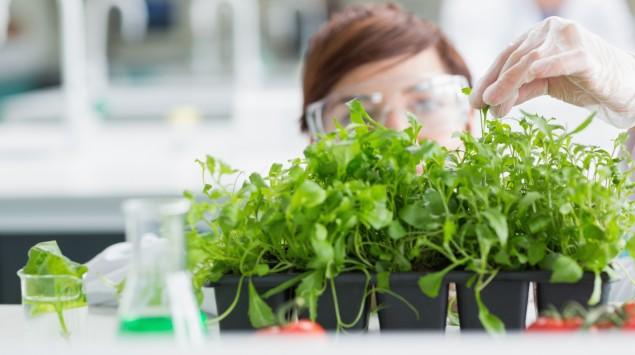 Das Bild zeigt eine junge Wissenschaftlerin, die eine Pflanzenprobe nimmt.