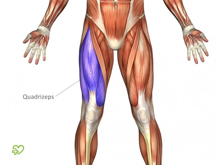Ausgezeichnet Muskeln In Den Beinen Anatomie Tabelle Galerie ...