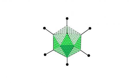 Man sieht die schematische Darstellung eines Adenovirus.