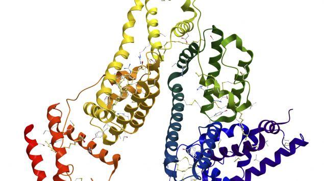 Das Bild zeigt Aminosäuren.