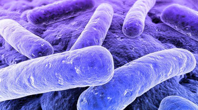 Man sieht mehrere stäbchenförmige Bakterien, die sich an eine Zelloberfläche angeheftet haben.