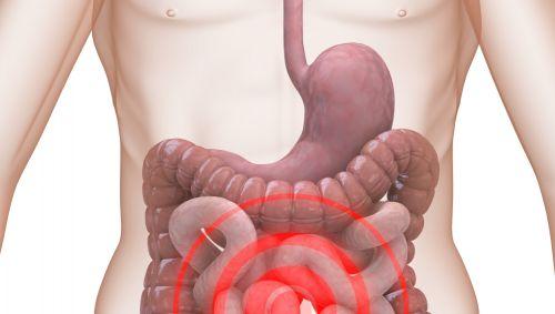 Illustration des menschlichen Darms