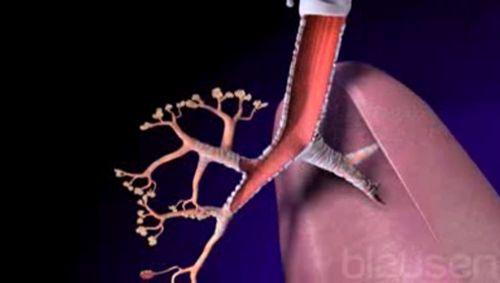 die Funktion der Lunge Video