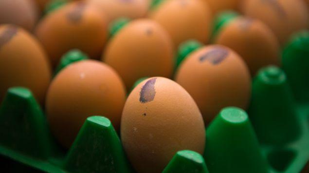 Das Bild zeigt Eier.