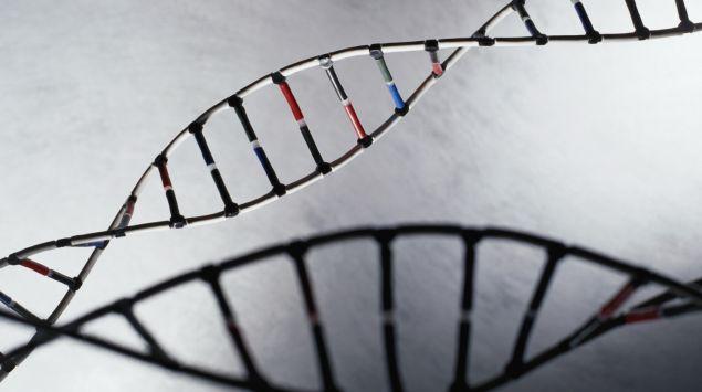 Modell der DNA-Helix