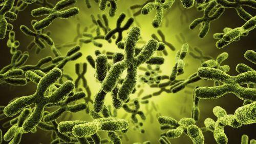 Das Bild zeigt Chromosomen.