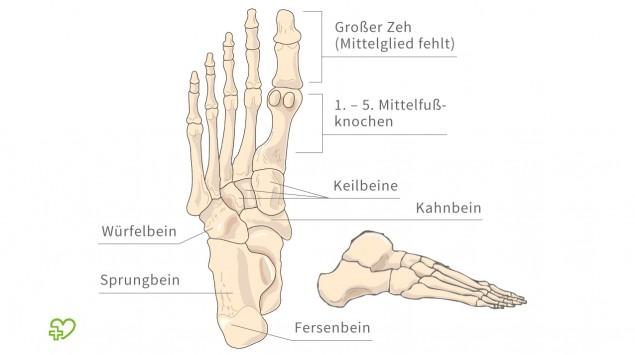 Abbildung des Fuß-Skeletts