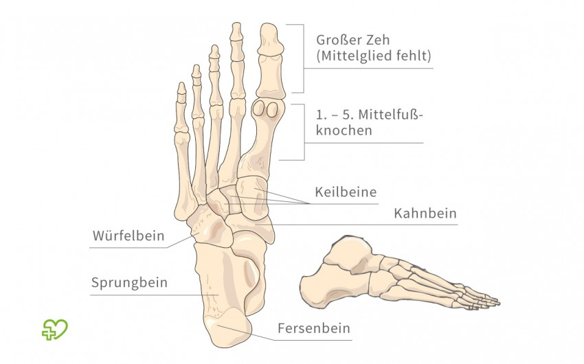 Das Skelett Füße - Onmeda.de
