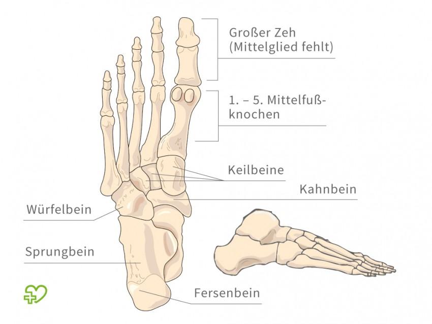 Charmant Bilder Von Fußknochen Zeitgenössisch - Anatomie Von ...