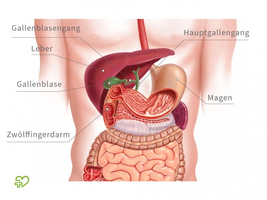 Die Symptome der Gallenblase Probleme | Medizin Deutschland