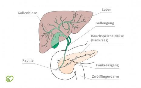 Lage der Gallenblase