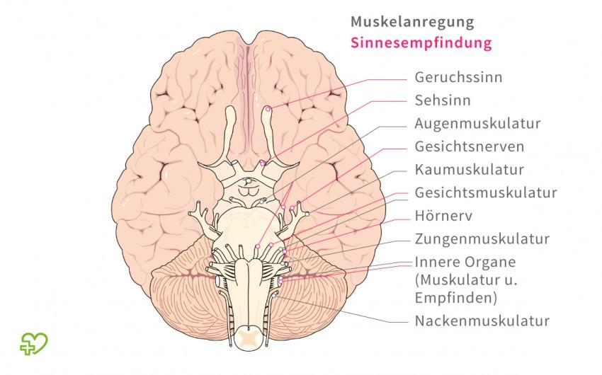 Illustration: Das Gehirn und seine Funktionen.