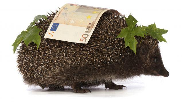 Ein Igel trägt einen 50-Euro-Schein auf dem Rücken.