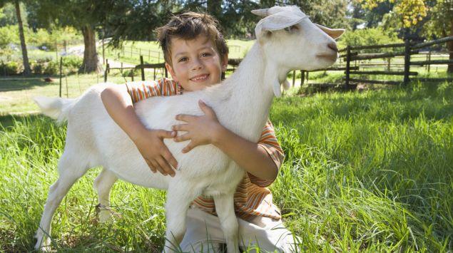 Man sieht einen kleinen jungen mit einer Ziege im Arm.