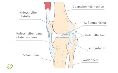 Eine grafische Darstellung der Anatomie des Kniegelenks.
