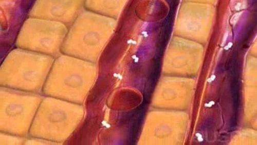 Kortikosteroide Video
