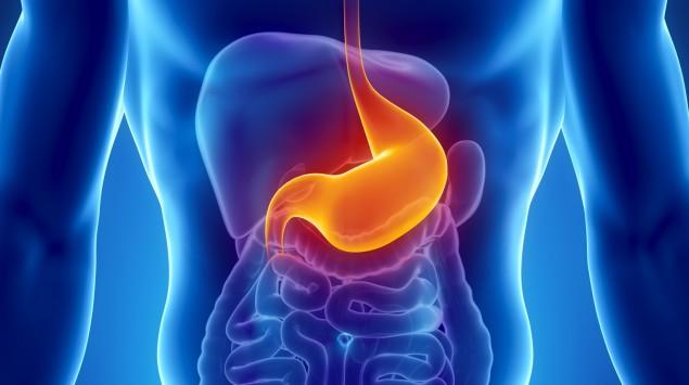 Der Magen: Man sieht eine schematische Darstellung der Verdauungsorgane im Körper.