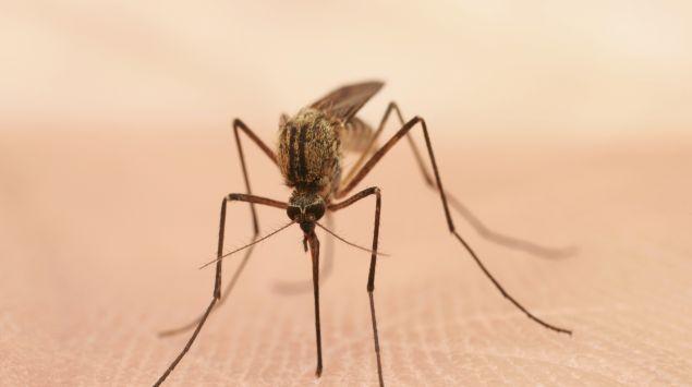 Das Bild zeigt ein Insekt.