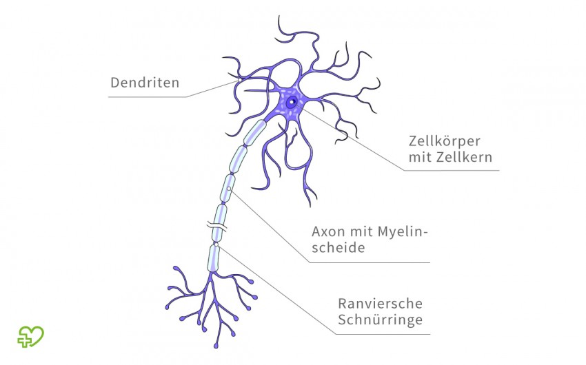 Illustration: Aufbau einer Nervenzelle