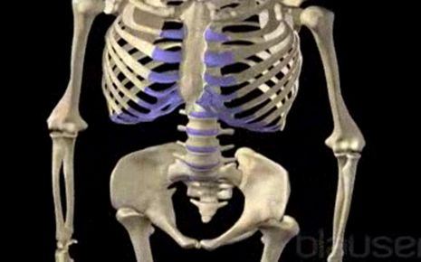 Osteoporose Video